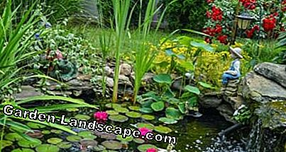 Insert water plants in the pond: pond