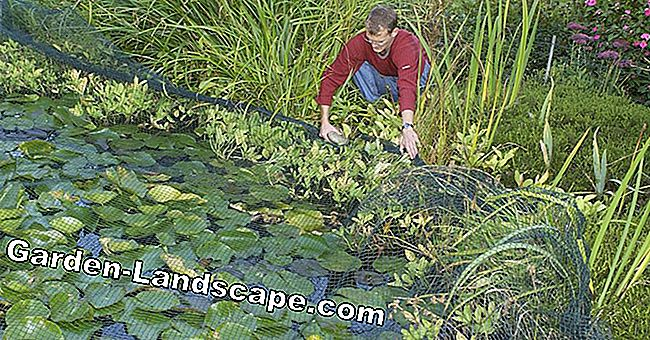 Winter protection for lawn and pond
