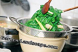 Spinach blanching instructions tips