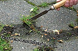 Clean pavement joints: This way driveways and so on are free of weeds