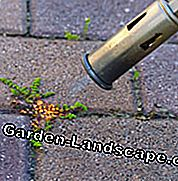 Remove weeds in pavement joints with gas