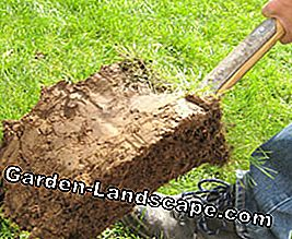 Occupational safety in the garden: this is the easiest way to avoid accidents