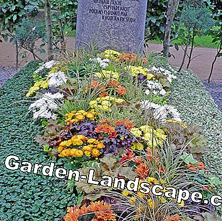 Combine groundcover with seasonal grave planting
