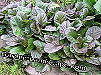 Ground Cover: The easy-care grave planting: planting