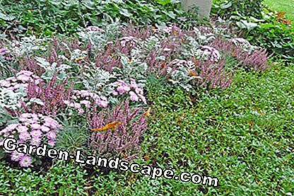 Tricolor grave planting with ground cover