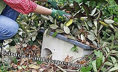 Stel Hedgehog house in
