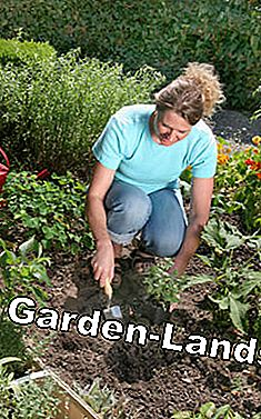 Woman laying out herbs in the bed before planting