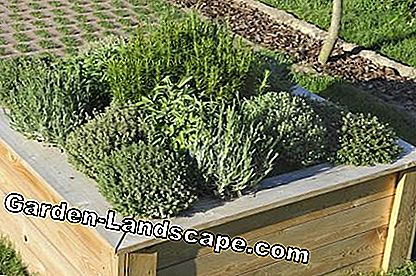 Half-height herb bed