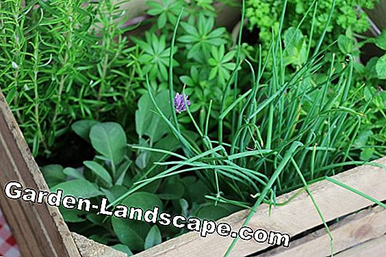Create herbal bed - tips for creating and planting plan: tips