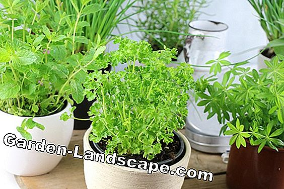 Plant the herb pot properly - variety selection for the balcony: variety