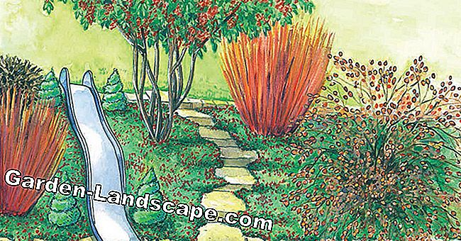For replanting: Easy-care slope planting