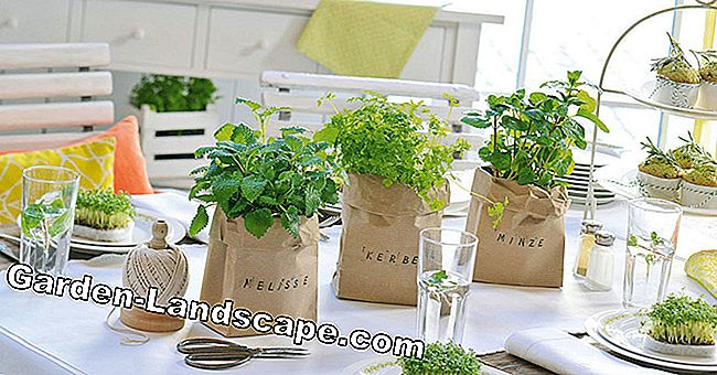 Ideas for decorative herb pots