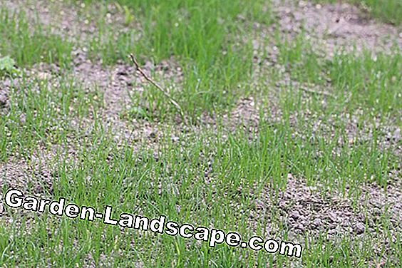 Fight brown spots in the lawn: lawn