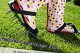 Lawn can also be aerated with nail shoes