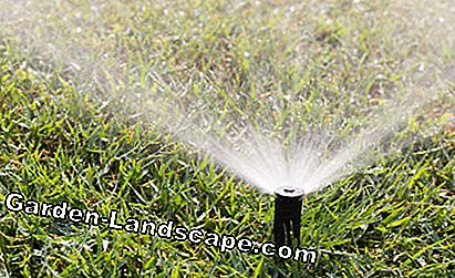 Lawn watering with sprinkler