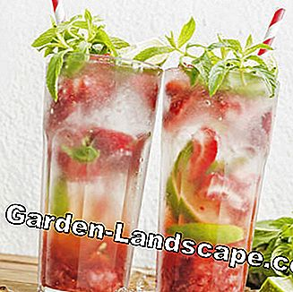Strawberry mojito with mint and limes