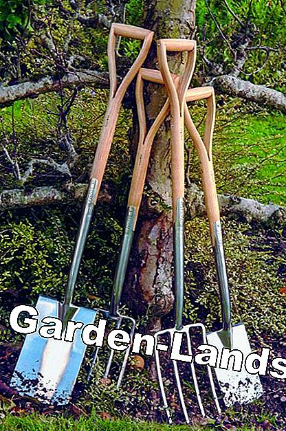 Leaning spade and forks on the tree