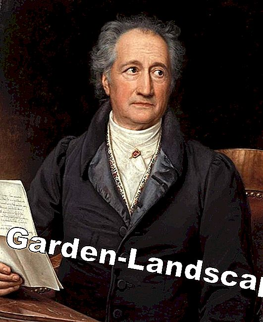Goethe and garden art: garden