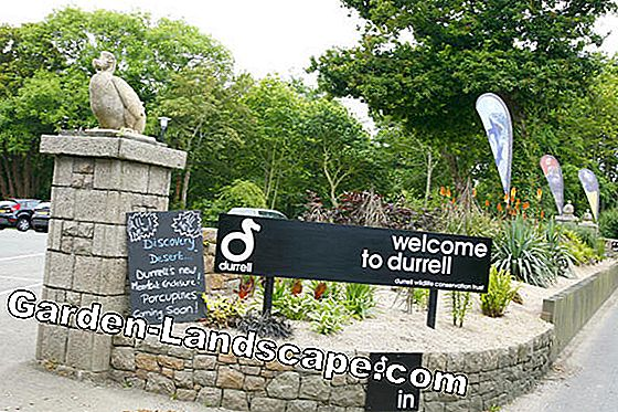Fondation Durrell Wildlife