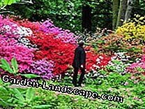 Les plus beaux jardins de rhododendrons: rhododendrons
