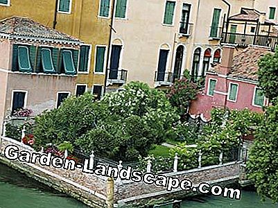 The secret gardens of Venice: secret