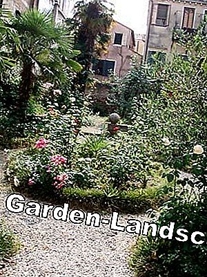 The secret gardens of Venice: city
