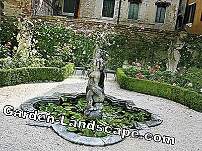 The secret gardens of Venice: gardens