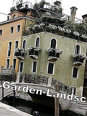 The secret gardens of Venice: Venice