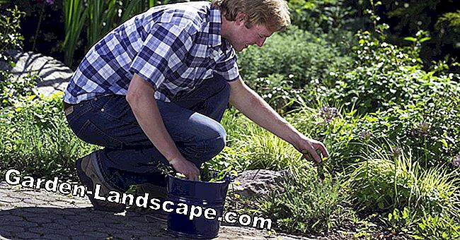 How to strengthen your back for gardening