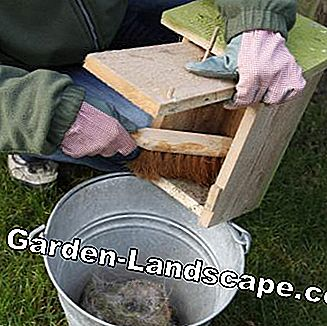 Sweep the nest box with a broom