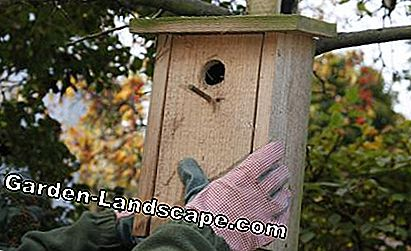 Hang the nesting box