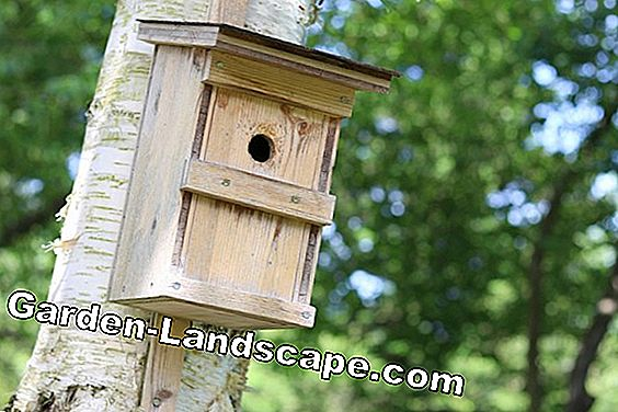 Blue tit - profile, lifestyle and nesting box tips