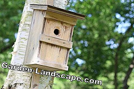 Bird houses for various bird species: nesting