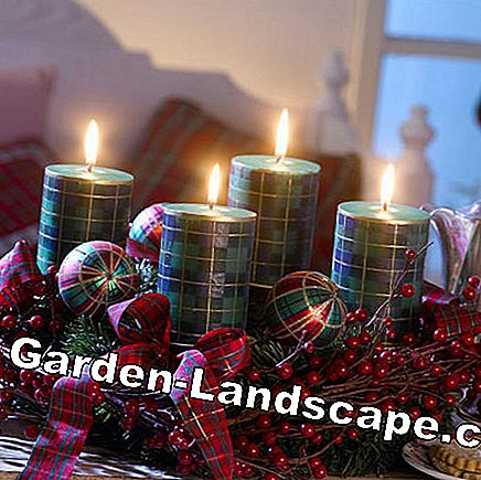 Advent wreath in plaid