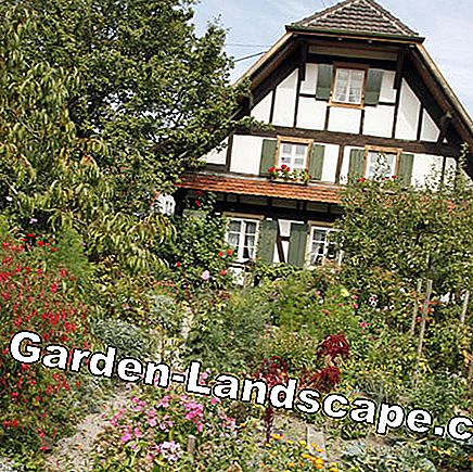 Country house garden with flowerbeds and trails