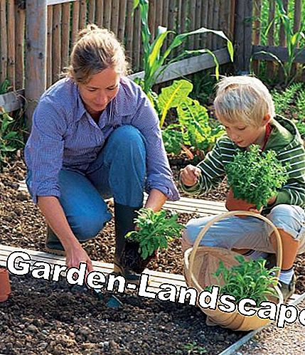 Gardening in the cottage garden