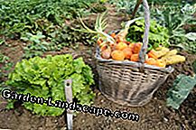 Store your vegetables in the garden