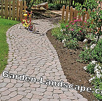 Garden path from Arena paving stones in wild bandage