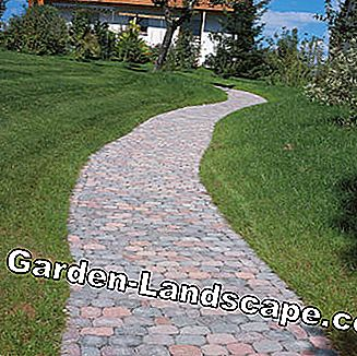 In the terraced paved garden path of arena paving stones
