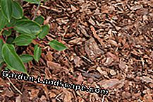 Make mulch out of green cuttings