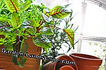 Herbs can also be planted on the windowsill