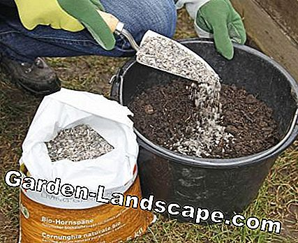 Mix horn shavings under the compost