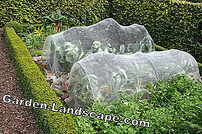 Vegetable bed with cultural protection net