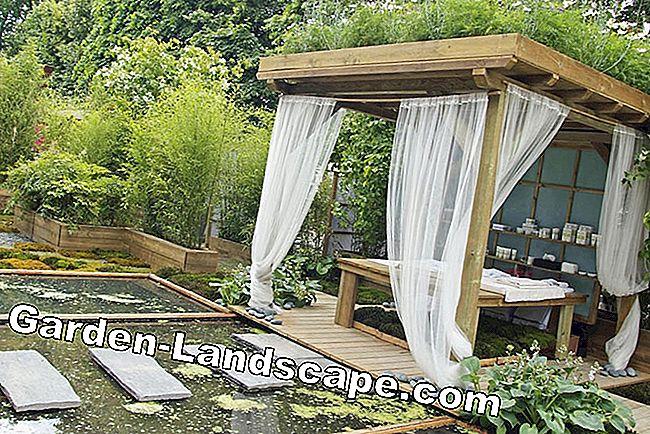 Anders pergola foto s ontwerp en tips mijn prachtige tuin