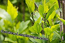 Plants regularly control pests