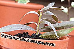 Multiply cuttings... and then transfer to potting soil