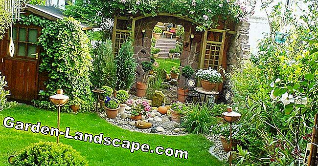Neat terraced gardening