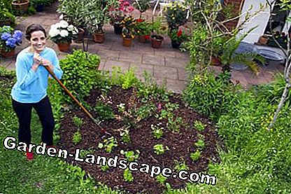 Bark mulch in the perennial border