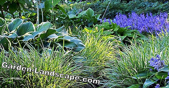 The perennials and their areas of life