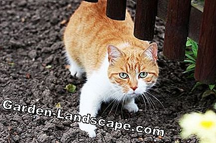 Animal repellent - cats, dogs and birds: garden